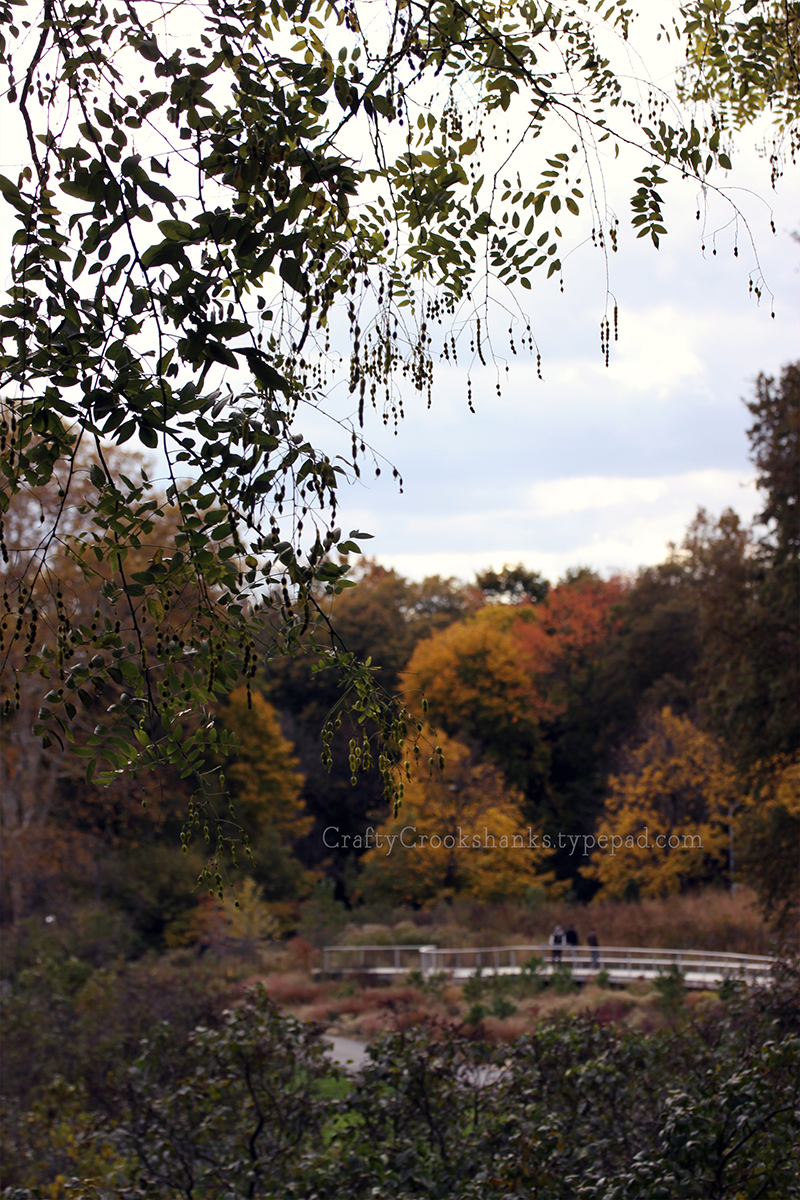Crafty Crookshanks: November at the Brooklyn Botanic Garden, 2014