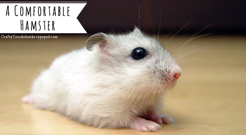 Crafty Crookshanks: A Comfortable Hamster