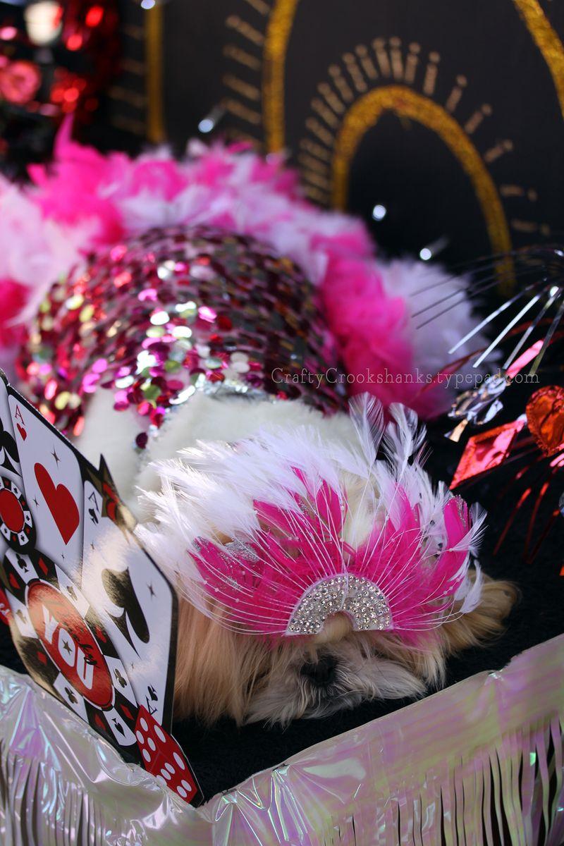 Crafty Crookshanks: Tompkins Square Halloween Dog Parade 2014