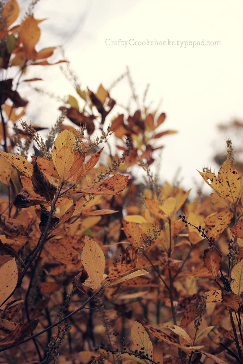 Crafty Crookshanks: November at the Brooklyn Botanic Garden, 2014